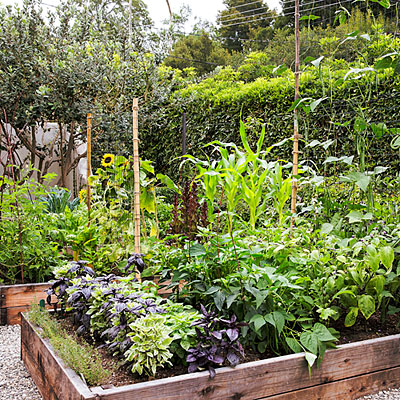 edible-garden-valerie-rice-summer-crops-raised-beds-0314-l