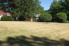 lawn drought